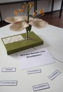 012-NW-Kirschblüte